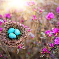 Free Image on Pixabay - Spring, Bird'S Nest, Eggs Free Pictures, Free Images, Spring Birds, Robin Bird, Flower Bird, Robins Egg, Bird Feeders, Holiday Decor, Flowers