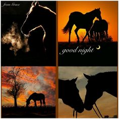 Sweet dreams my friend. Good Morning Good Night, Good Night Quotes, Day For Night, Nature Pictures, Animal Pictures, Cool Pictures, Beautiful Day Quotes, Collages, Sunset Silhouette