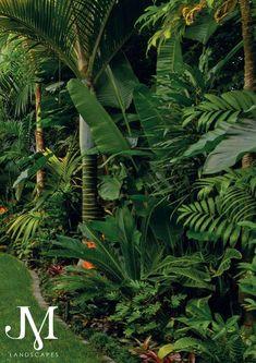 Small Tropical Gardens, Tropical Garden Design, Modern Garden Design, Backyard Garden Design, Small Gardens, Tropical Plants, Bali Garden, Balinese Garden, Lush Garden