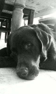 BAILEY!