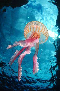 stunning jellyfish