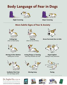 Dog Bite Prevention Tips For Kids There is always body language to warn you preceding a dog bite. Learn the signs, and educate your children.There is always body language to warn you preceding a dog bite. Learn the signs, and educate your children. Dog Body Language, Sign Language, Dog Anxiety, Anxiety Quotes, Social Anxiety, Dog Behavior, Animal Behaviour, Dog Training Tips, Pet Care