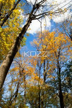 view of autumn trees. - Low angle view of autumn trees.