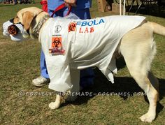 Witty Labrador Retriever Costume: EBOLA LAB... Coolest Halloween Costume Contest