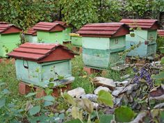 Bee hives in a row. That's so cute! Such nice bright colors, too.