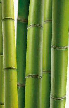 INCI Bambusa Arundinacea Stem Extract El polvo de bambú es un polvo blanco muy ligero y alternativo a los polvos minerales Es un producto 100 de