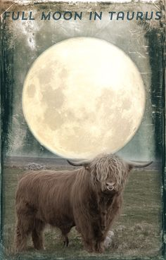 Full Moon in Taurus – A Matter of Life and Death