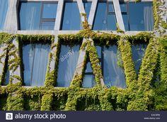 Concrete Framework & Virginia Creeper or Vine on the Pavillon Noir Ballet Building by Rudy Ricciotti Aix-en-Provence France Stock Photo