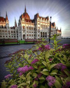 A spring morning at the Parliament (Budapest/Hungary)  #budapest #cityscape #welovebudapest #nature #ig_captures #wonderful_places #thisisbudapest #picoftheday #spring #travelstoke #bestplacestogo #flowers #hungary #sunrise #city #photooftheday #beautifuldestinations #TravelAwesome #cbviews #TravellingOurPlanet #architecture #colors_of_day #travel #travellingtroughtheworld #parliament @fantastic.colours @discoverearth #ig_europe #igs_europe #morning #worldplaces #iphone @moodygrams…