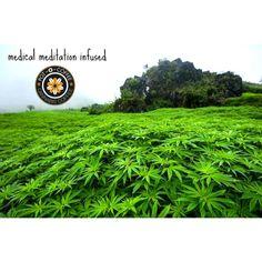 #Cannabis or #CBD #infused #coffee #tea #cocoa #California #Washington #Oregon…