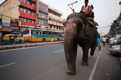Just moseyin' through the streets of India