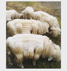Taking performance art to a whole new level. All you #weavers out there- some morning inspiration for your next project. #art #sheep #gorgeouscreatures by jacquifink