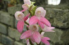Les orchidées | Espace pour la vie
