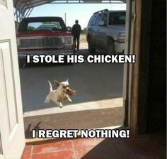 15 Funny Animals That Regret Nothing - Funny Animals - Daily LOL Pics