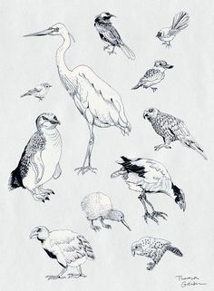 25 Ideas kiwi bird illustration fine art for 2019 Native Drawings, Bird Drawings, Animal Drawings, Bird Wallpaper Bedroom, Collages, Scientific Drawing, Diy Bird Bath, Nz Art, Pretty Drawings