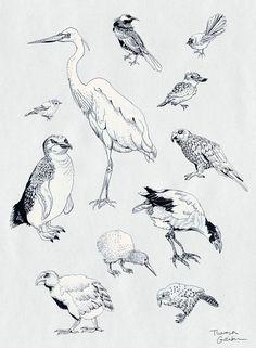 Birds of New Zealand – Bird Art Print – pretty scientific drawing, bird illustration, chart, home decor – in mauve, grey, black – New Shop