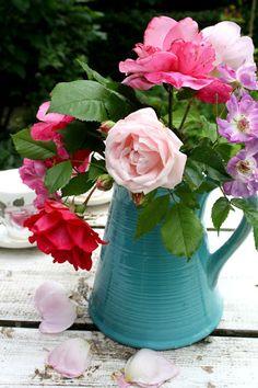 Madelief: Late June garden
