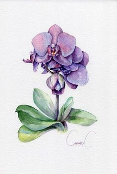 Orchid pink purple Flowers Watercolor Original Painting from the Artist Sve Orchids Painting, Watercolor Plants, Floral Watercolor, Orchid Drawing, Plant Drawing, Art Paintings, Watercolor Paintings, Original Paintings, Tattoo Watercolor