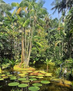 Having lived in the past few years in a concrete jungle like New York, I can most definitely appreciate the abundance of flora and fauna . Singapore Botanic Gardens, Concrete Jungle, Flora And Fauna, Travelogue, Botanical Gardens, Abundance, Plants, Flora, Plant
