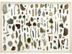 Herman de Vries (nr. 9) - From the Forest Floor, 2010 © Herman de ...