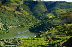 Douro valley, #Portugal