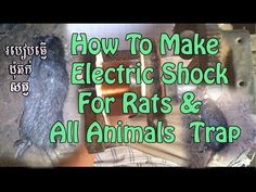 How To Make a High Voltage Mouse Trap / Electric Shock For Rats & All ...