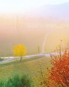 Tutte le sfumature dì #Franciacorta50 !   #franciacorta #brescia #winestagram #sparklingwine #winecellar #italianwine #wineblogger #winetourism #villafranciacorta #villaiseverywhere #luxuryvilla #winespectator #inlombardia #saporeinlombardia #visitlakeiseo #wineexperience #sparklinglife #italianwines #luxurylifestyle #madeinitaly #vineyards #cellar #winelover #winetasting #winetime #winery #instawine