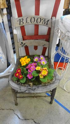 I love primroses and there are so many different kinds. However, the prettier they are, the tastier they must be because they disappear faster from my flower bed. Old Chairs, Outdoor Chairs, Adirondack Chairs, Ikea Chairs, Black Chairs, Outdoor Plants, Outdoor Decor, Chair Planter, Garden Basket