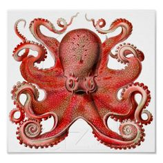 Shop Vintage Ernst Haeckel Octopus in Yellow Poster created by tartanphoenix. Personalize it with photos & text or purchase as is! Ernst Haeckel, Octopus Drawing, Octopus Art, Octopus Decor, Fish Art, Kraken, Octopus Shower Curtains, Gravure Illustration, Tattoo Designs