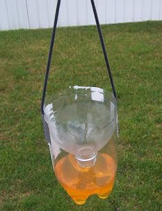 The Wild Domestic: An effective, homemade wasp/fly trap, for about 20 cents!