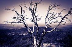 worn-down tree