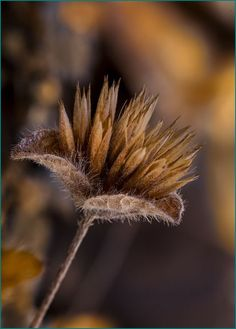"""~ Autumn ~ """"In every change, in every falling leaf there is some pain, some beauty. And that's the way new leaves grow. Brown Shades, Seed Pods, Autumn Day, Winter, Planting Seeds, Earth Tones, Graphic, Leaves, Painting"""
