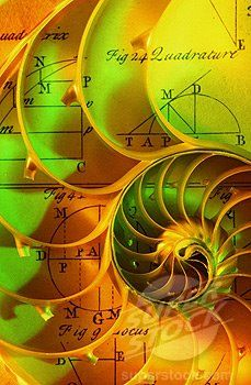 """""""Phenomenon that ties the mathematical spiral to the experiential spiral. In practical terms, they are one and the same. It will take a bit of explanation to demonstrate the probably ridiculous notion that the golden mean spiral can be experienced most simply as a profound feeling of love. Simply put, the Golden Mean Spiral is a doorway that weaves the ethereal and material dimensions together"""""""