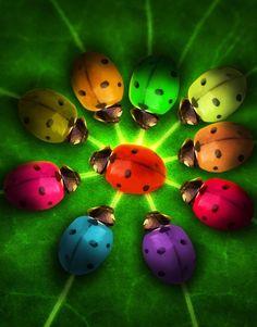Rainbow ladybugs