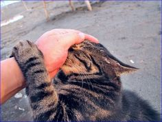 I do this to every cat I meet