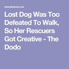Lost Dog Was Too Defeated To Walk, So Her Rescuers Got Creative - The Dodo