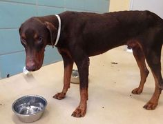 Handsome, sweet and neglected needs rescue ASAP