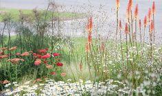 Summer Borders, Fall Borders, Garden Ideas, Border ideas, Perennial Planting, Perennial combination, Achillea millefolium 'Red Velvet', Stipa tenuissima, Foeniculum, Leucanthemum, Kniphofia, shasta daisy