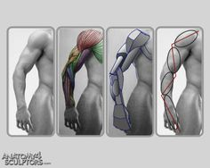 Human Figure Drawing Anatomy for Sculptors 27 by on deviantART - Arm Anatomy, Anatomy Poses, Anatomy Study, Body Anatomy, Anatomy Art, Anatomy Organs, Human Anatomy Drawing, Male Figure Drawing, Figure Drawing Reference