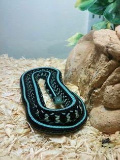 Risultati immagini per snake images Pretty Snakes, Cool Snakes, Colorful Snakes, Beautiful Snakes, Cute Reptiles, Reptiles And Amphibians, Cute Funny Animals, Cute Baby Animals, Beautiful Creatures
