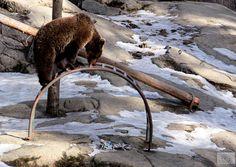 Karhujen Kevätmarkkinat -tapahtuma, Ähtärin Eläinpuisto © Marjut Hakkola, 2014 | Ähtäri Zoo, Finland - http://en.wikipedia.org/wiki/%C3%84ht%C3%A4ri_Zoo