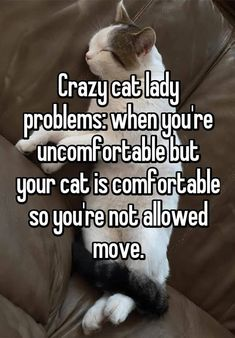 """18 THINGS YOU SHOULD KNOW BEFORE DATING A CAT LADY 1. First of all, define """"cat lady."""" Does one cat = cat lady? Two cats = cat lady?"""