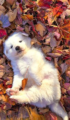 How perfect! A puppy in fall leaves :D