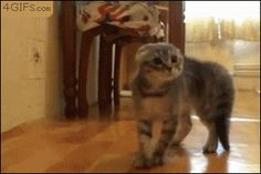 This cat who suddenly forgot to cat stand. | 29 Cats That Forgot How To Cat