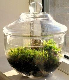 Adorned Moss Terrarium by LadyFarrah, via Flickr