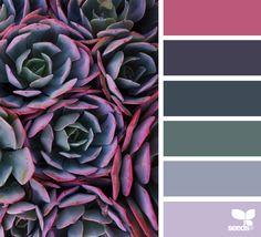 { succulent hues } image via: @traceylbolton