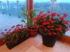 Plants, Gardening, Nature, Beleza, Garten, Flora, Plant, Lawn And Garden, Planting