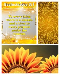 To every thing there is a season, and a time to every purpose under the heaven: Ecclesiastes 3:1 KJV