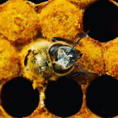 Home page - Ania's Roots & Bees Beginning Of Spring, Bees And Wasps, Save The Bees, Winter Solstice, Bee Keeping, Queen Bees, Blessed, Eggs, Number
