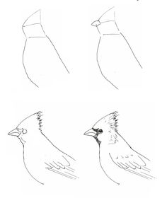 How to Draw A Cardinal Bird Draw A Cardinal Art Class Ideas Art Projects Bird Drawings, Easy Drawings, Animal Drawings, Drawing Sketches, Pencil Drawings, Sketching, Drawing Birds, Drawing Drawing, Drawing Lessons